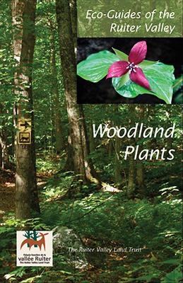 Publication Plante des sous-bois