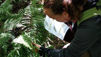 Formation sur l'identification des arbres